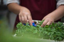 La Petite Ferme - Herbs (HR) photo Claire Gunn